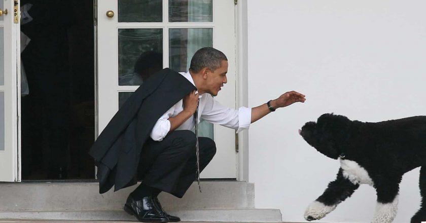 O cão de água português da família Obama faleceu!